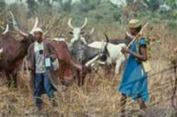 Suspected herdsmen kill dozens in Nigeria
