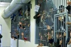 EU Watchdog: Torture in Europe Prisons Feeds Terror