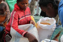 Madagascar: FAO and WFP Call for Urgent Action Against Increased Food Insecurity
